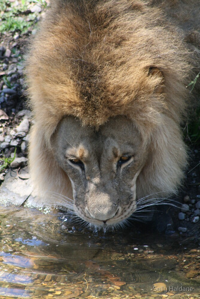 Thirsty Work for the King by Sally Haldane