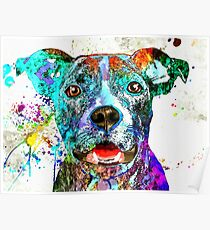 American Pit Bull Terrier Poster