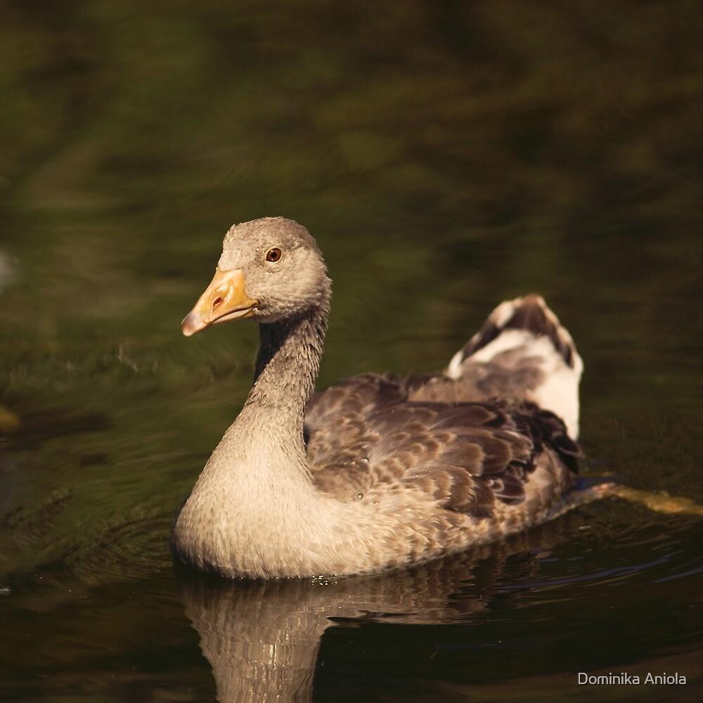 Ducky by Dominika Aniola