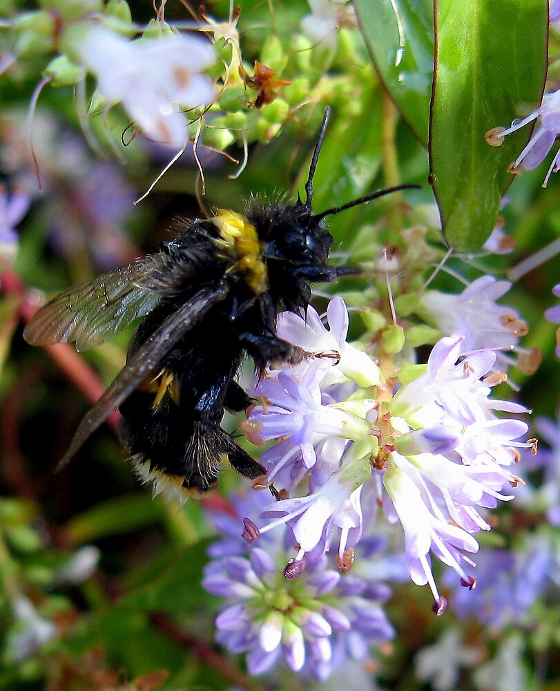 Busy Bee by kitlew