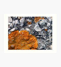 Orange and Grey Lichen #2 Art Print