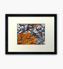 Orange and Grey Lichen #2 Framed Print