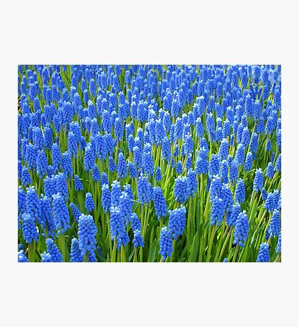 A Sea of Blue Photographic Print