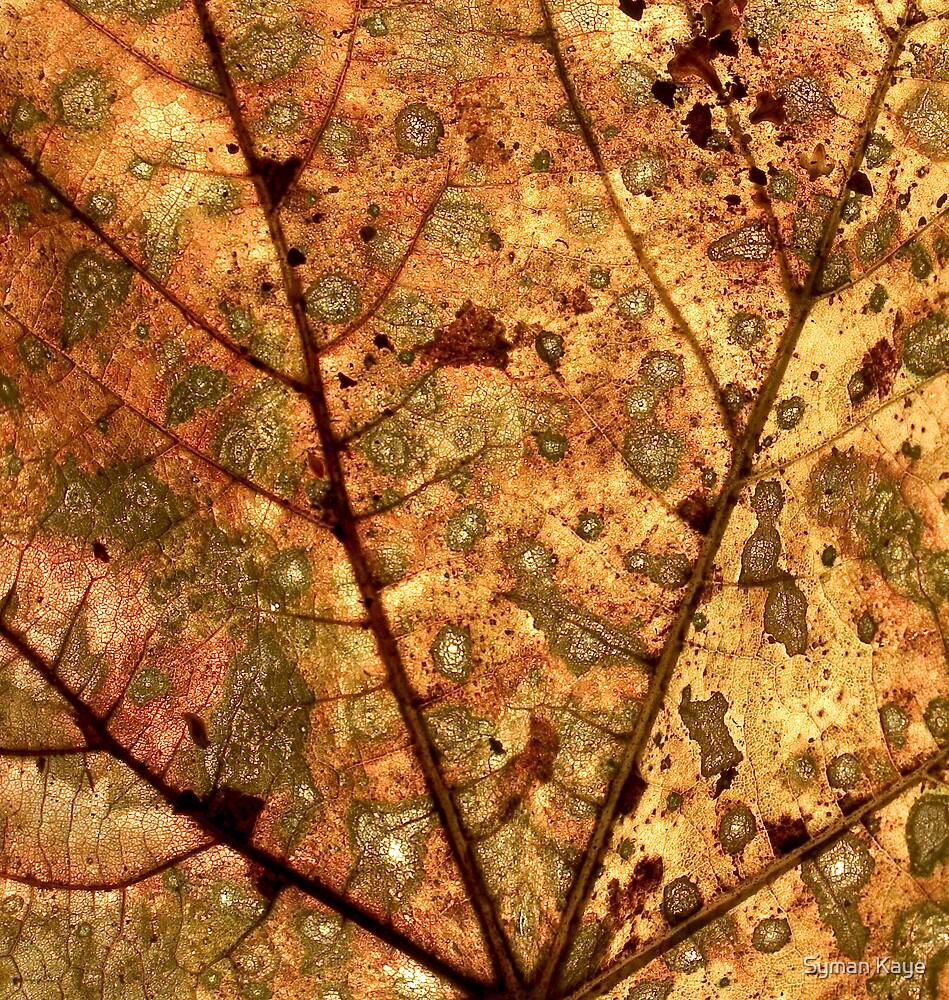 Orange Leaf by syman