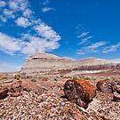 Petrified Logs at Crystal Forest by Jeff Goulden