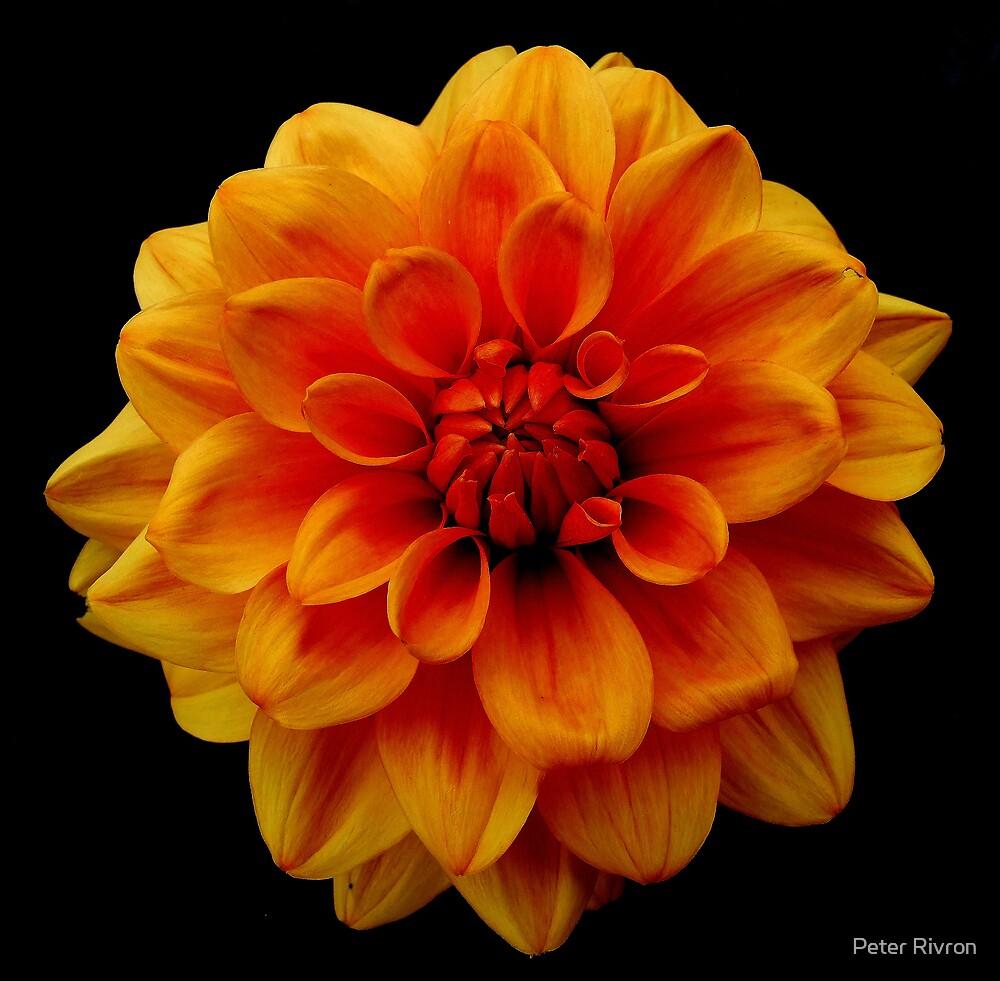 Botanic Garden 036 by Peter Rivron