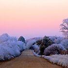 Sunset Strip by NatureGreeting Cards ©ccwri