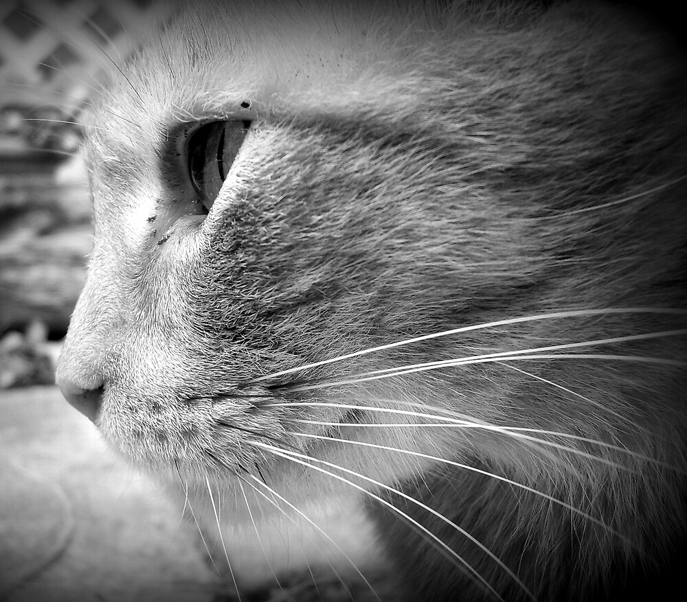 Stray Cat (B&W) by grcc