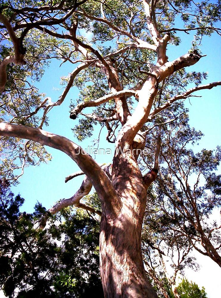 Unscribbled Tree by Juliana Warne