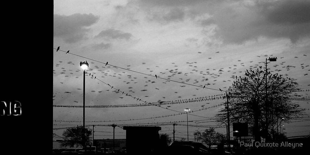 BIRDS, BIRDS, BIRDS AND MORE OF THEM by Paul Quixote Alleyne