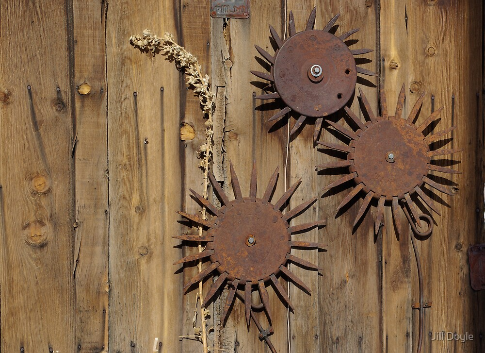 Metal Flowers by Jill Doyle