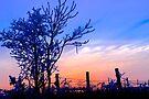 December Sunset by NatureGreeting Cards ©ccwri