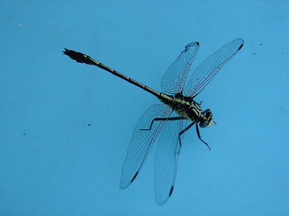 Dragonfly far from home by inventor