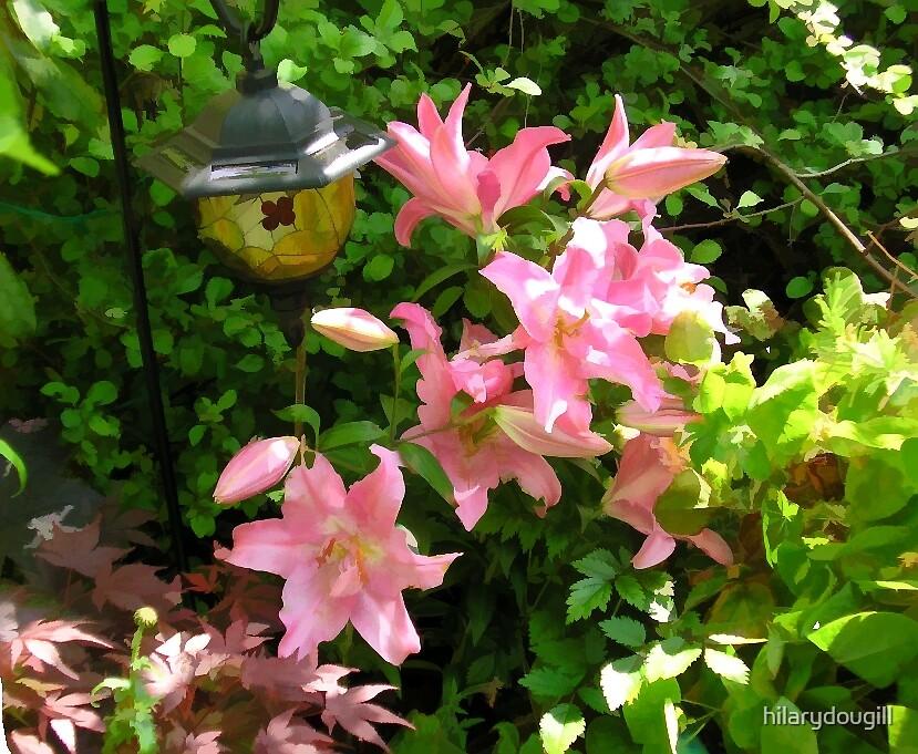 Lilies by hilarydougill