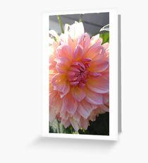 Stunning Dahlia Greeting Card