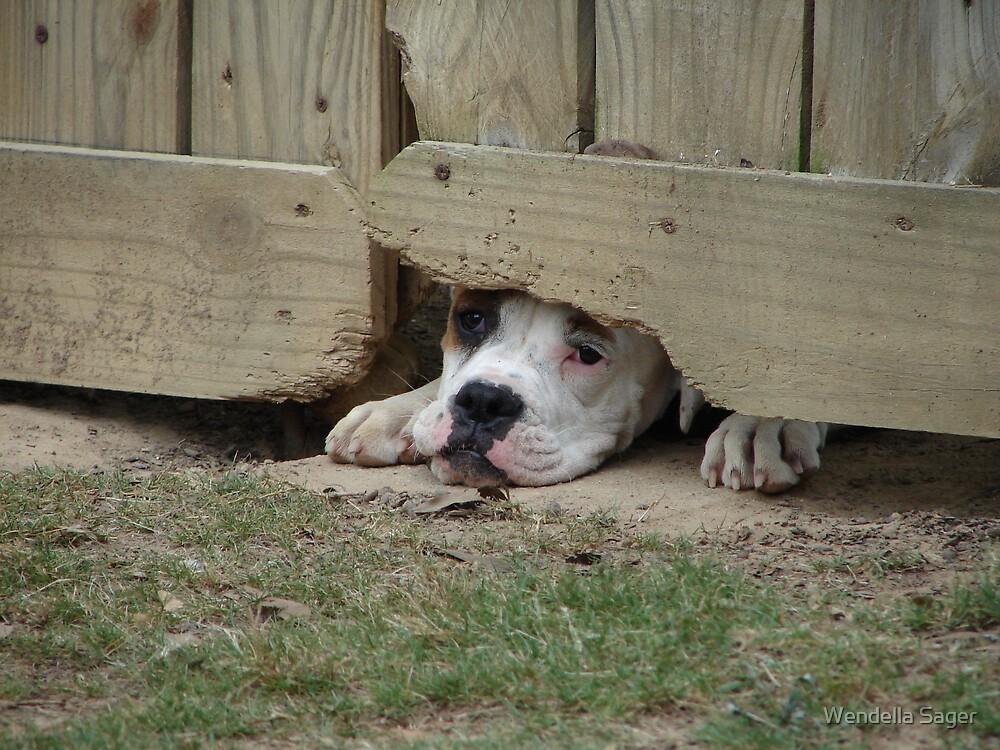 Please......let me out. by Wendella Sager