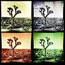 Joshua Tree Quad by Peter B