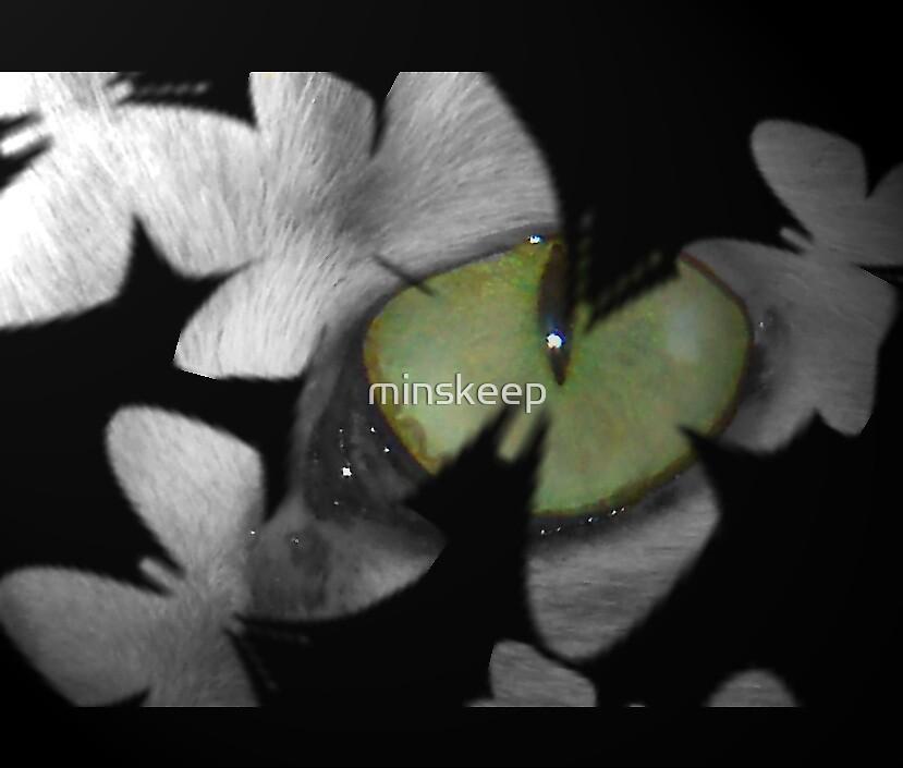 Cat Eye by minskeep