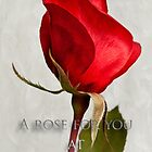 One red rose holiday card by Celeste Mookherjee