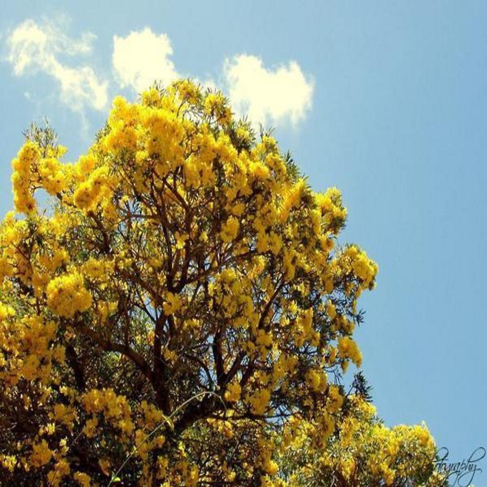 beautiful tree by nicolecimm
