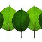 Leaf Brigade by Carlos Phillips