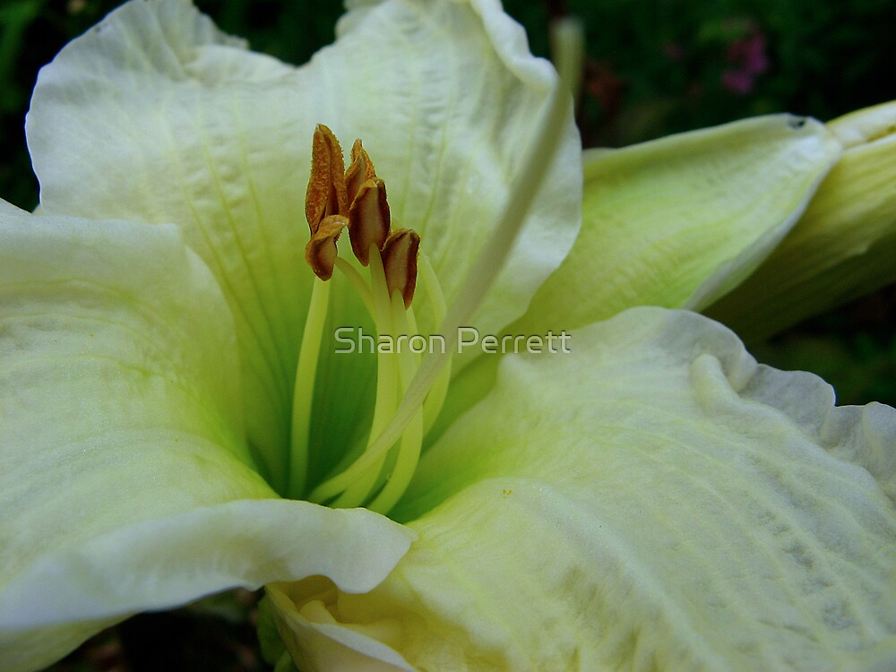 Lovely Lily for Elenne by Sharon Perrett