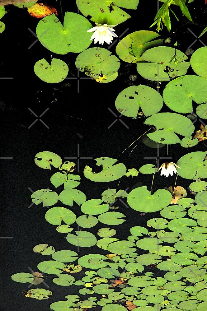 Lily Pond by christiane