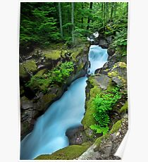 Avalanche Creek -- Glacier National Park Poster
