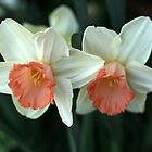 Narcissus by agnessa38