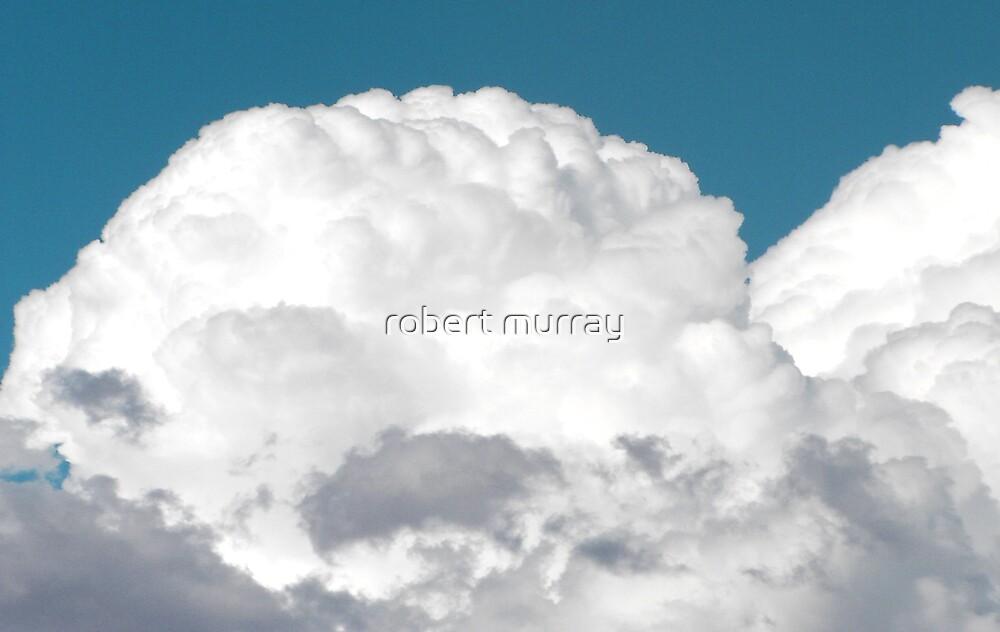 The Brain by robert murray