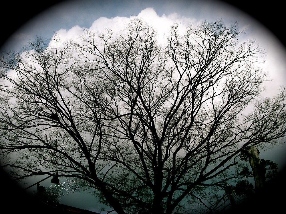 Japanese Tree by Samuel Kaylor