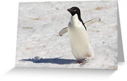 """Adelie Penguin  ~  """"The Dancer"""" by Robert Elliott"""