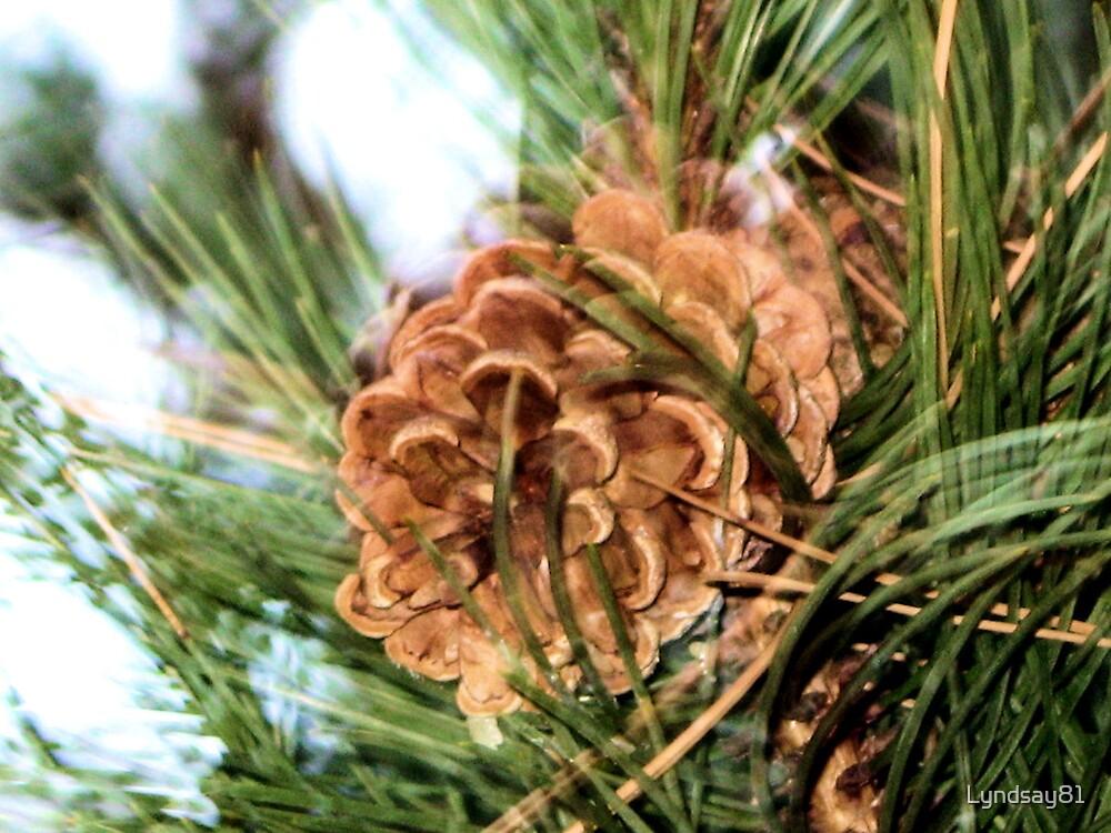 Pines by Lyndsay81