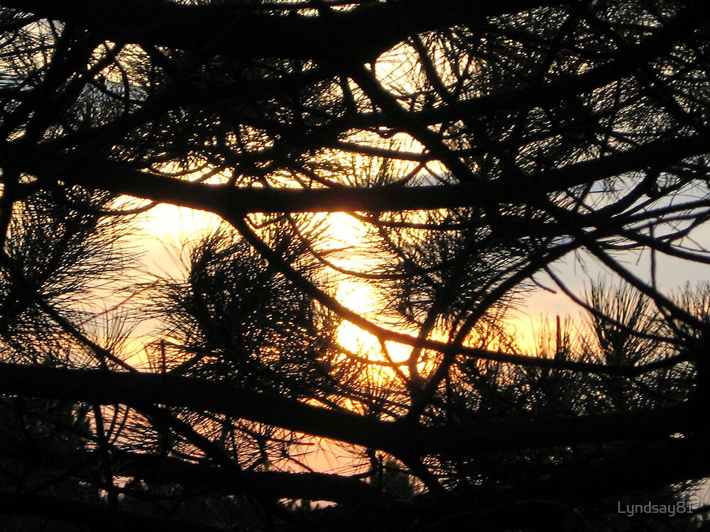 Sunset Through The Trees  by Lyndsay81