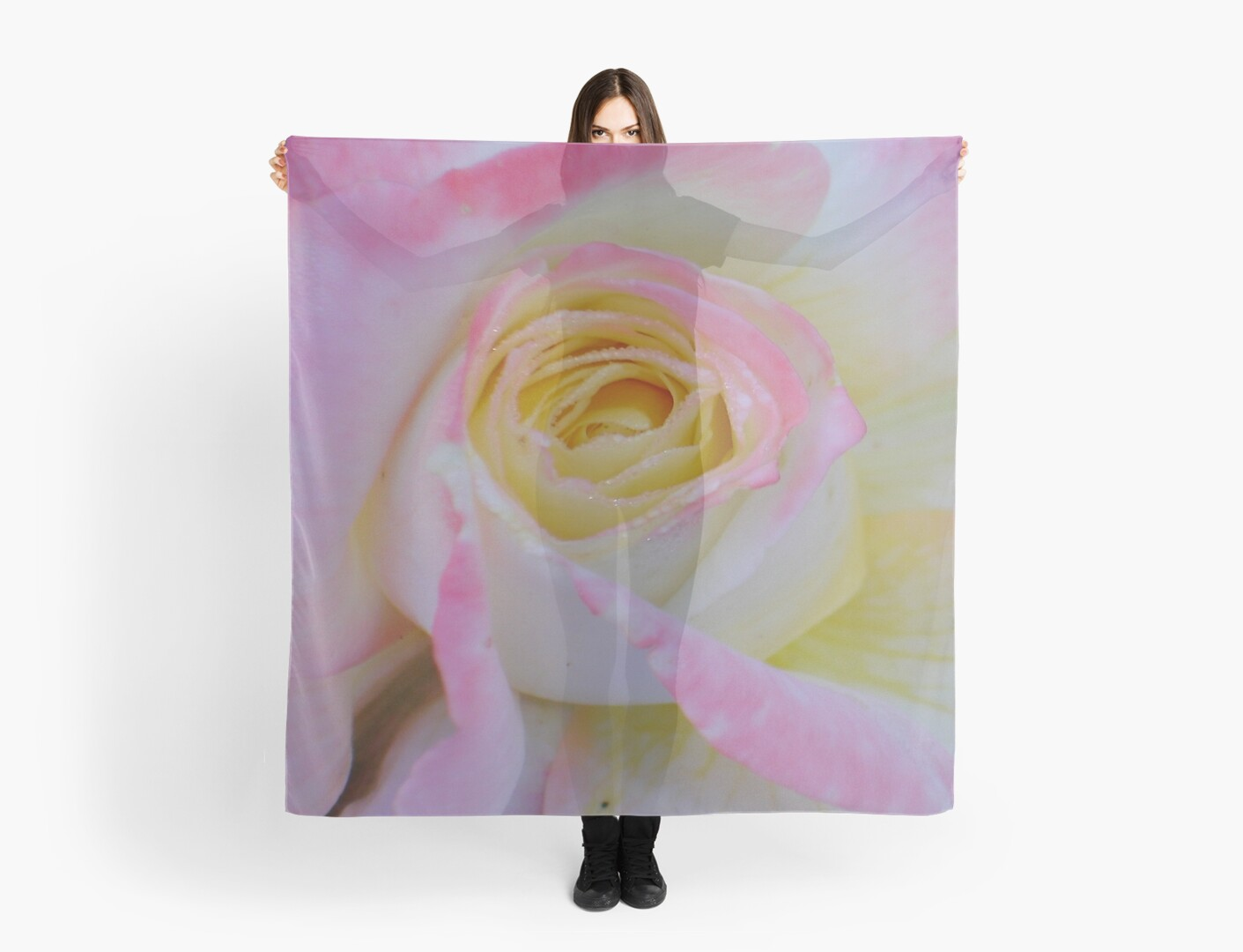 Beautiful Pink Rose Closeup  by taiche