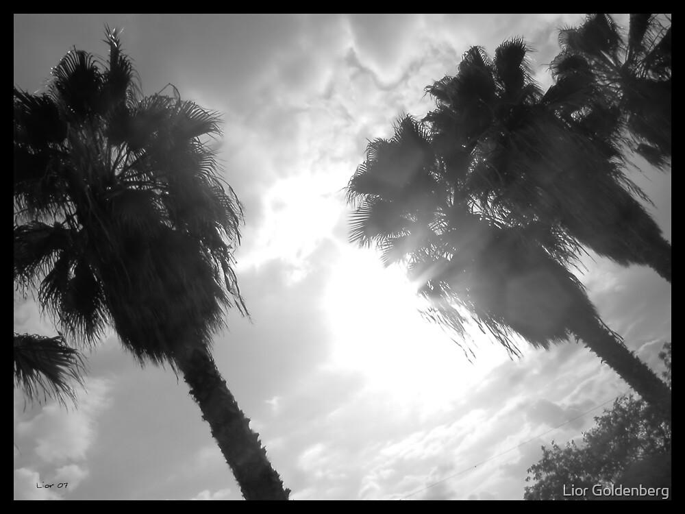 Palms by Lior Goldenberg