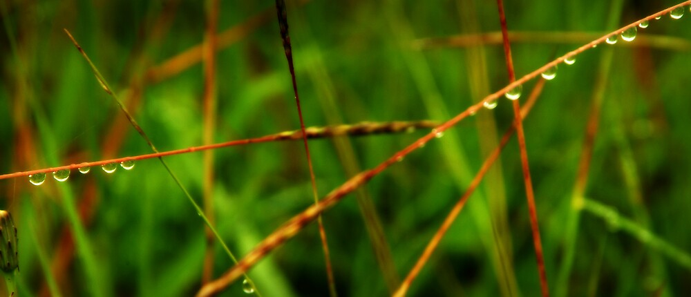 grass droplet by Sheryleigh