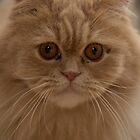 Persian cat by Jagged-designs