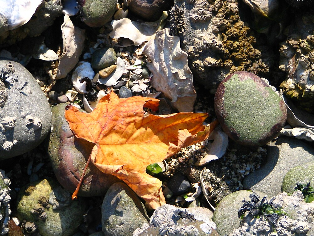 Fall at the Beach by MelindaUSA79