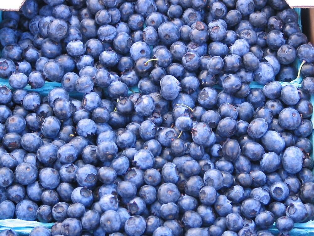 Blueberries! by MelindaUSA79