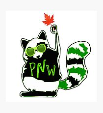 PNW Rebel Raccoon Maple Leaf Photographic Print