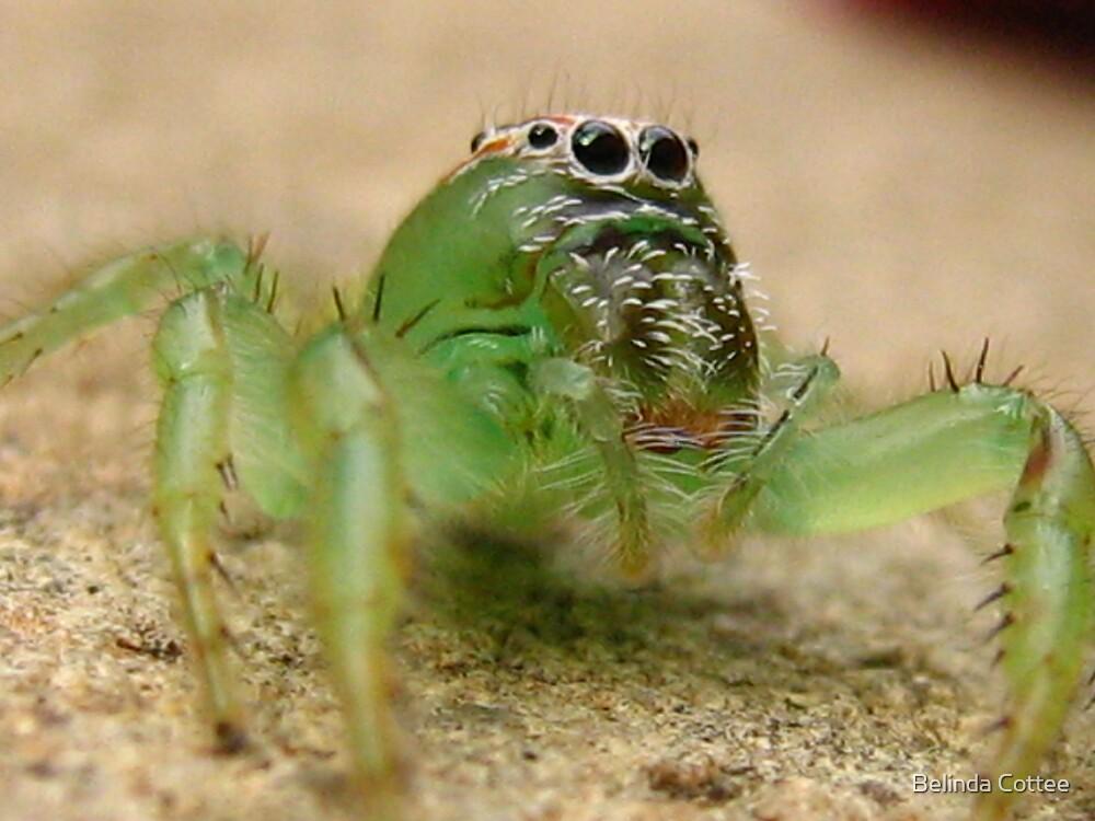 spidereyes by Belinda Cottee