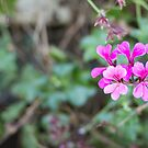 Purple petals by Danielle Espin
