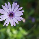 Large purple flower by Danielle Espin