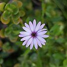 Single Flower by Danielle Espin