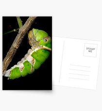 Hanging On Postcards