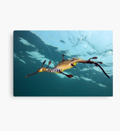 Weary Weedy Canvas Print