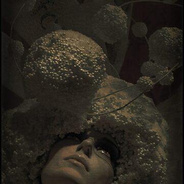 Imago by Daaram