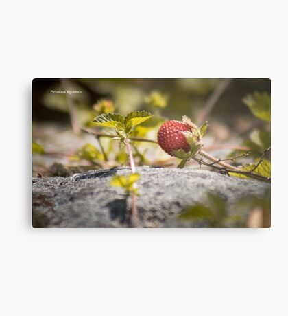 The lonely strawberry Metal Print