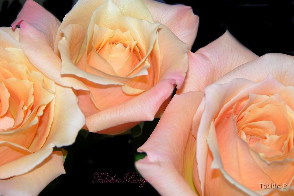 Enchanted Love by Tabitha B